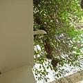 房間門口整串整串的鳥巢