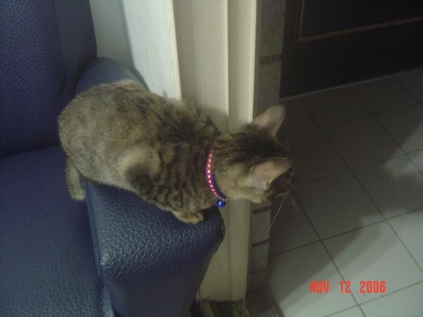 看看有沒有人偷用我的貓砂XD
