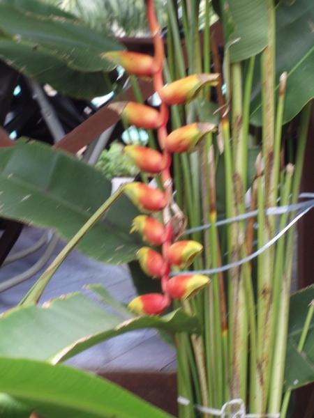 不知名的奇怪植物