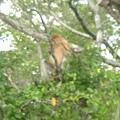 長鼻猴!!!