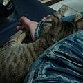 窩在媽麻腳上睡