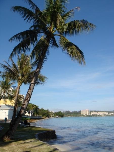 藍天,大海,棕梠樹