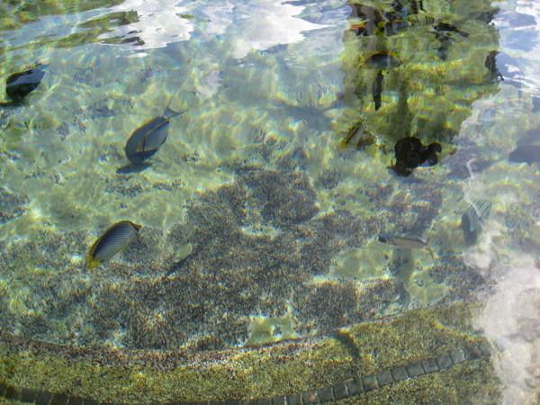 人魚共游池