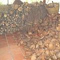 滿滿的椰子殼