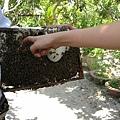 蜂蜜給大家試吃