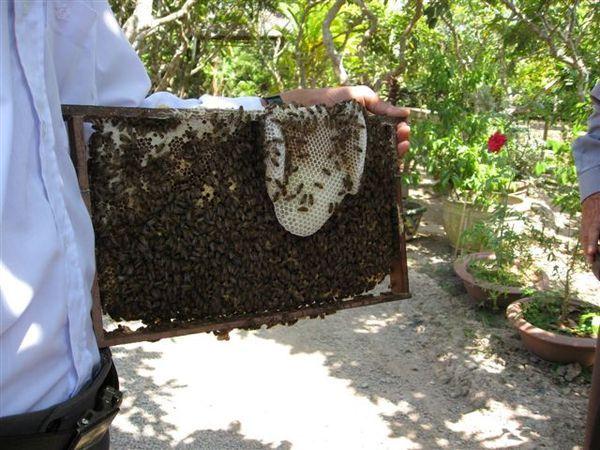 滿滿的蜜蜂