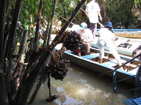 長的很特別的水椰子