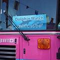 這是要去看海豚的巴士