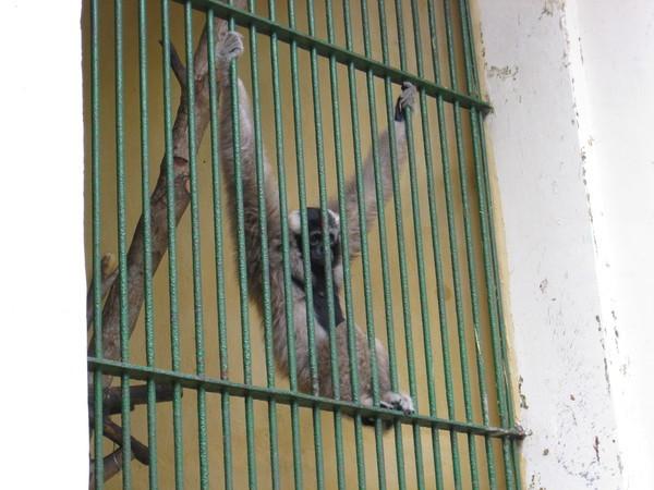 胡志明動物園的猴