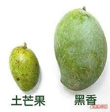 「土芒果」的圖片搜尋結果