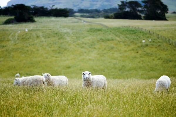 人工智慧翻轉農牧業,讓這個產業變得很不一樣!讓人推翻過去的種種印象.