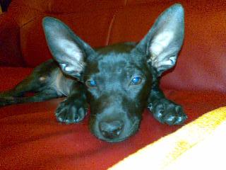 黑皮-6-好大的耳朵