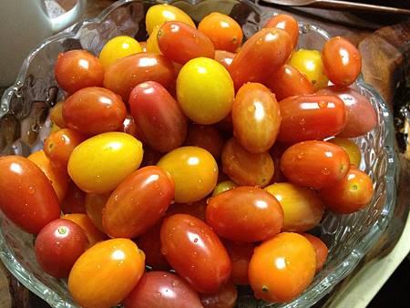 102.12桃園採蕃茄