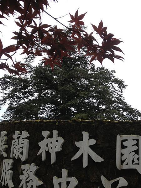 103.06棲蘭神木群