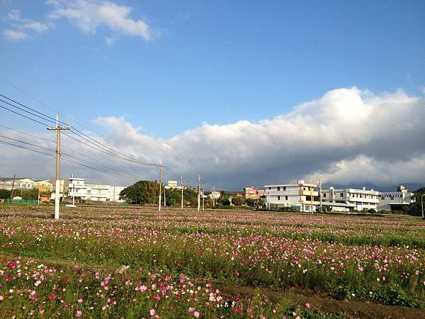 103.11三芝賞花