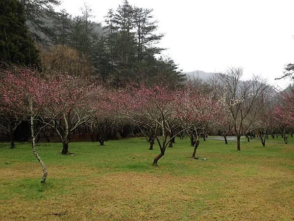 10501武陵農場