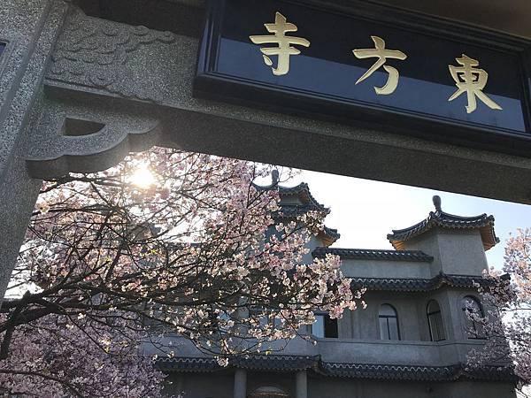 東方寺之櫻