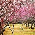 春 2.jpg