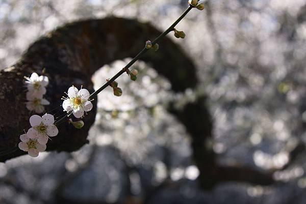 春 10.jpg
