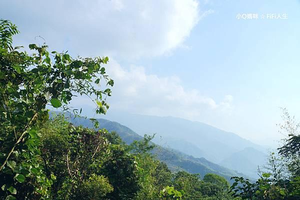 綠光森林4.jpg
