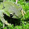 台北樹蛙網頁