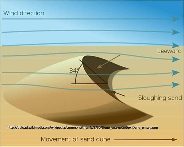 沙丘生態系