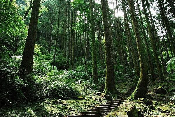 東眼山森林遊戲區