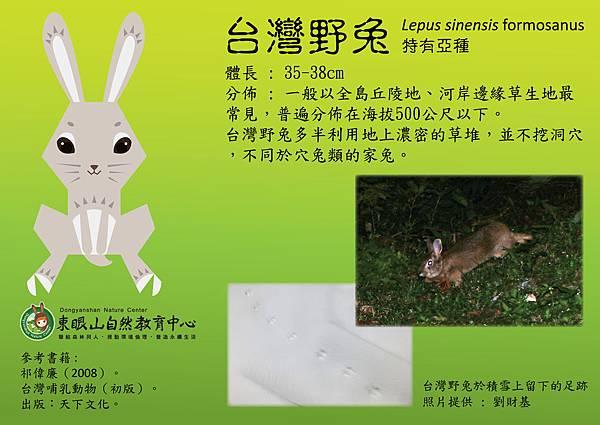 2016_4 animals_台灣野兔