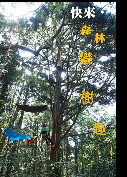 快來,森林攀樹趣!