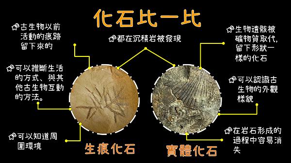 一些圖檔(化石比一比).png