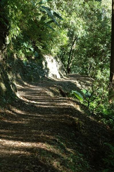 東眼山森林步道