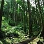 東眼山森林遊戲區.jpg