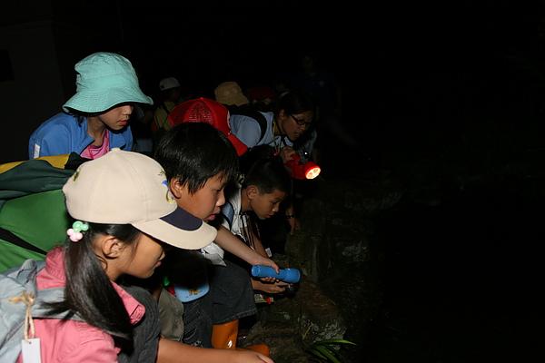 蟲蟲秘境-夜間觀察.JPG