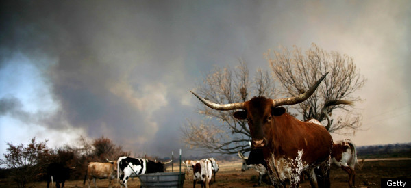 r-TEXAS-WILDFIRES-2011-large.jpg