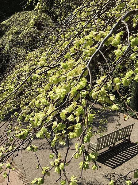 花園一景_4.jpg