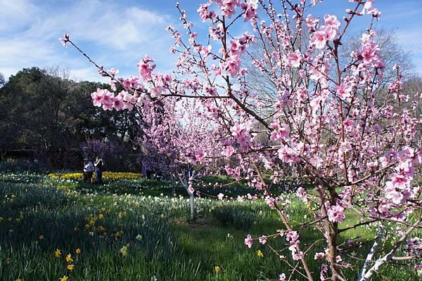 花園一景_7.JPG