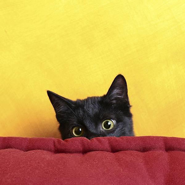 只有貓知道主圖.jpg