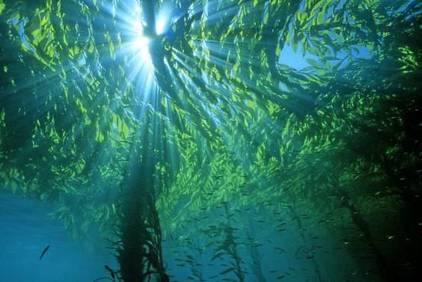 1016知識_挪威海藻