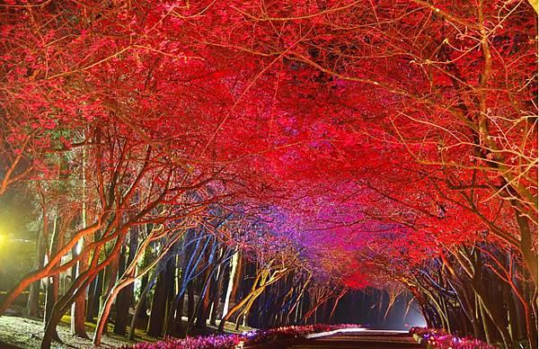 九族櫻花祭3