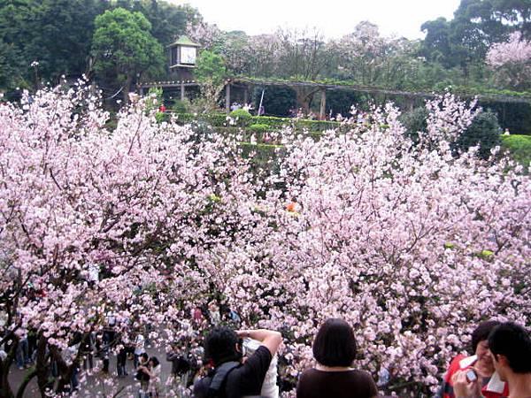 2010.3.14初訪天元宮花況