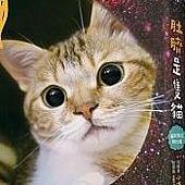 肚臍是隻貓.jpg