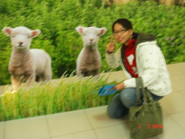 美國加洲湖景鎮農場-可憐ㄉ小羊