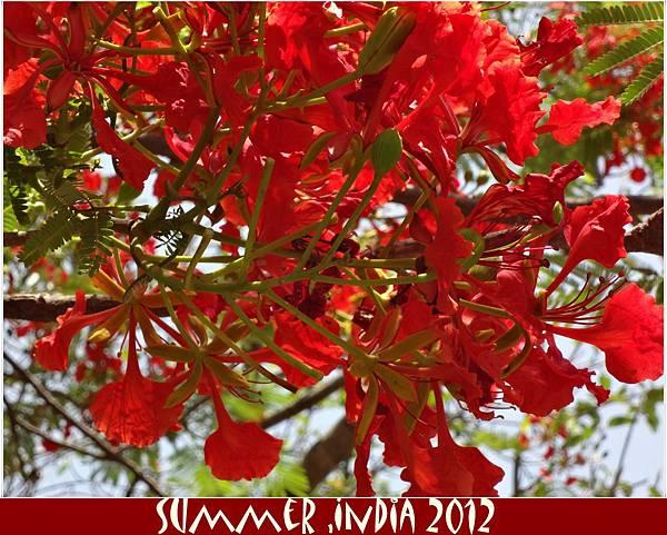 summer india 2012
