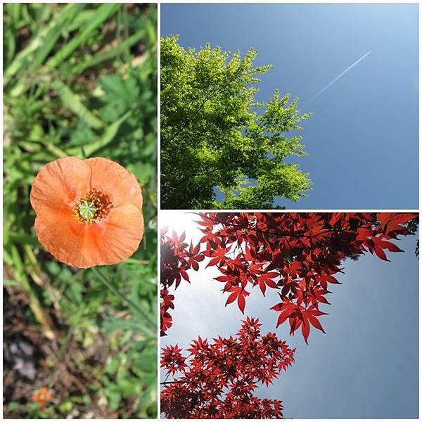 植物拼貼.jpg