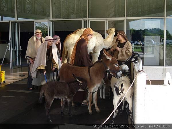 Crystal Cathedral ~ 準備表演的演員和驢、羊、馬?!