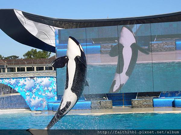 Shamu 殺人鯨秀 ~ Sea World San Diego
