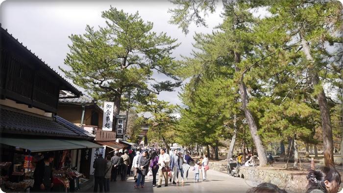 往東大寺的路上,右邊是奈良公園