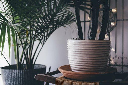 bamboo-plant.jpg