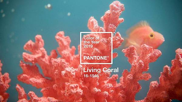 pantone-colour-of-year-2019-living-coral-design_dezeen_hero-852x479.jpg