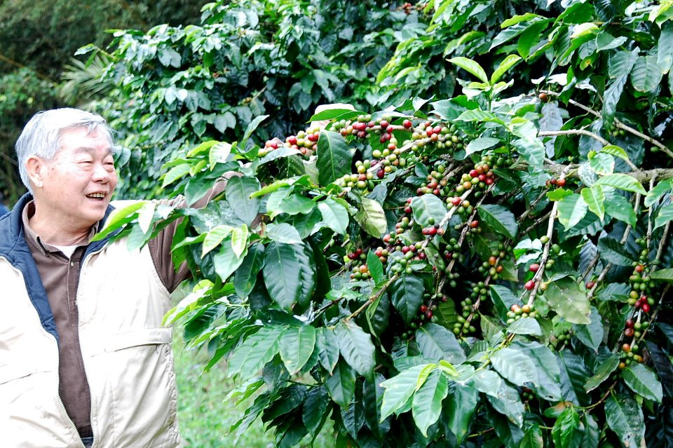 李老先生與咖啡樹